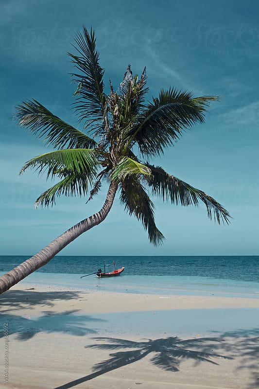Beach Palm Tree by WAA for Stocksy United