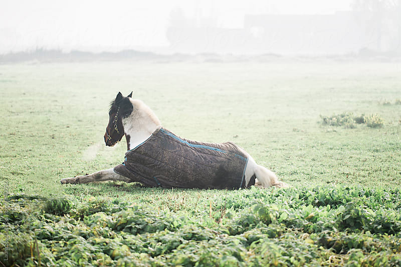 Horse relaxing in turf in foggy winter morning by Laura Stolfi for Stocksy United