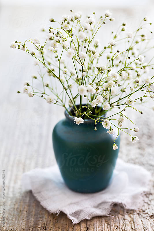 White gypsophila by Corinna Gissemann for Stocksy United