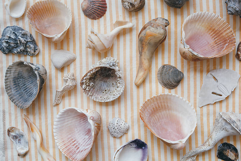 collection of shells  by Kelly Knox for Stocksy United