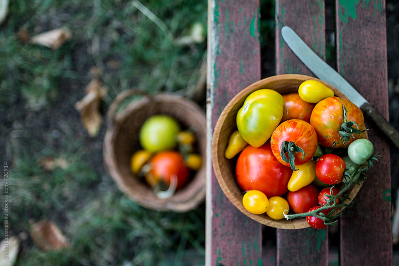 Fresh tomatoes in the garden bench by Babett Lupaneszku for Stocksy United