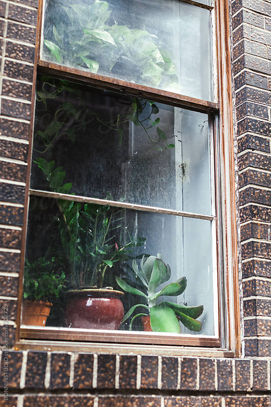 Plants behind of a window on an apartment. by BONNINSTUDIO for Stocksy United