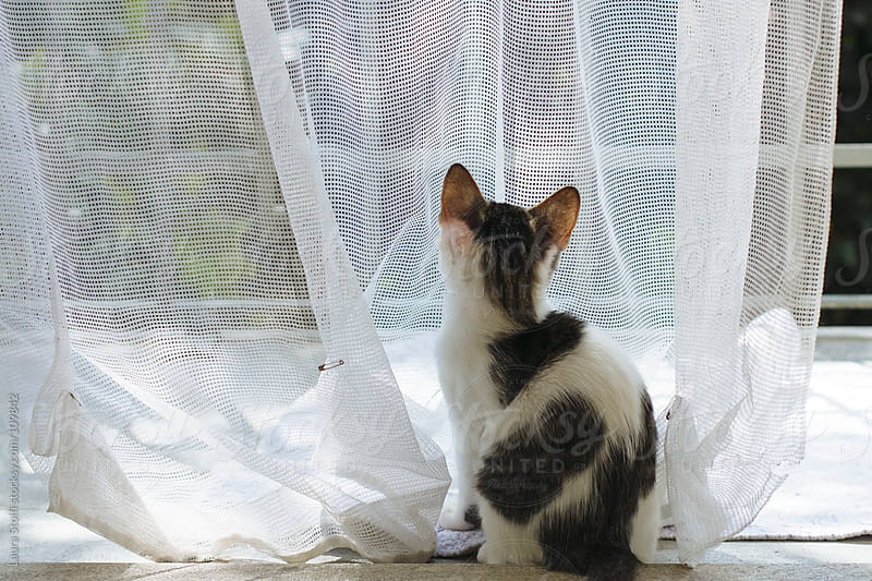 Kitty cat looking at a garden through mosquito curtain by Laura Stolfi for Stocksy United