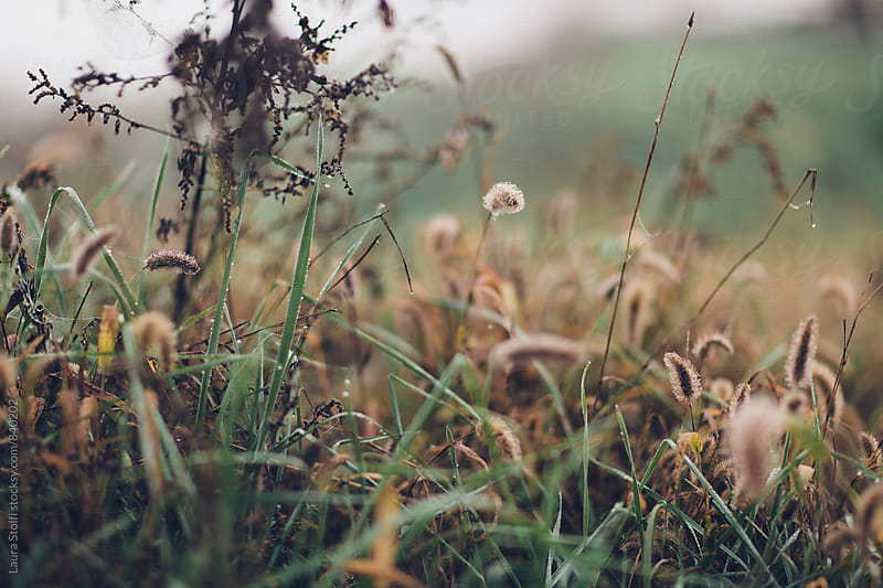 Macro catch of wild spikes and grass in winter countryside by Laura Stolfi for Stocksy United