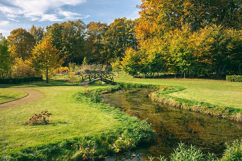Autumn scene by Zocky for Stocksy United