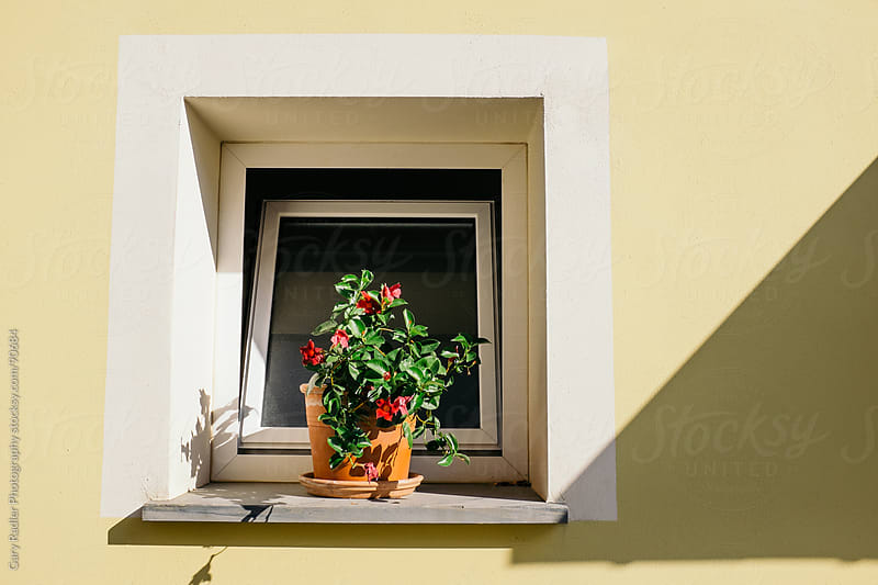 Pot Plant on an External Window Ledge by Gary Radler Photography for Stocksy United