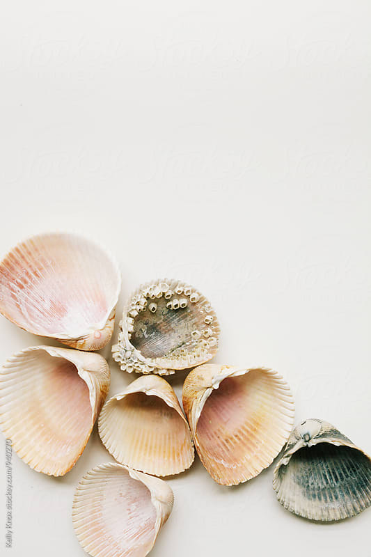 cockle shells gathered on a white background by Kelly Knox for Stocksy United