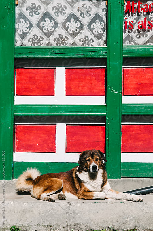 Dog resting outside a tea house, Lukla Valley, Everest Region, Sagarmatha National Park, Nepal. by Thomas Pickard for Stocksy United