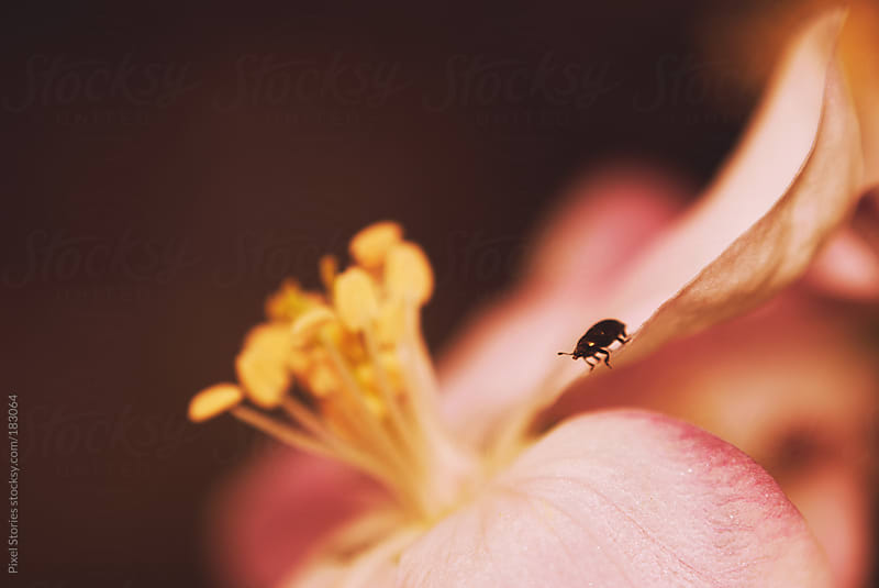 Cute bug on spring blossom by Pixel Stories for Stocksy United
