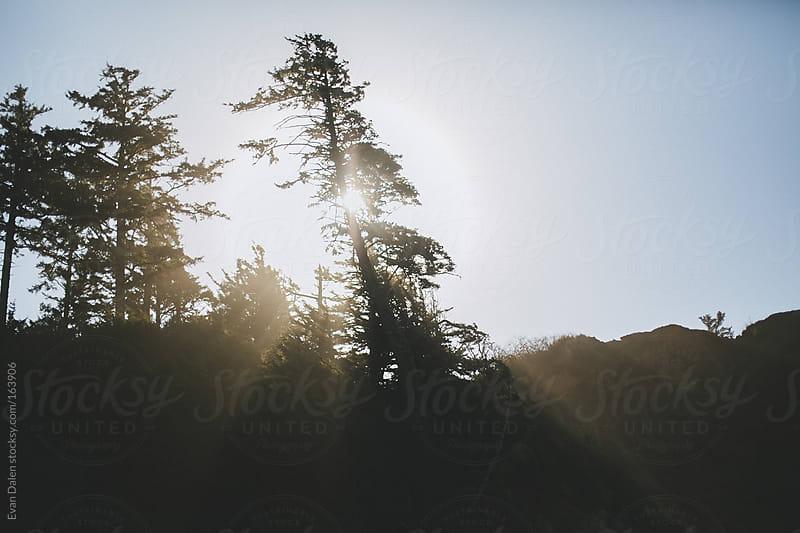 Sunbeams by Evan Dalen for Stocksy United