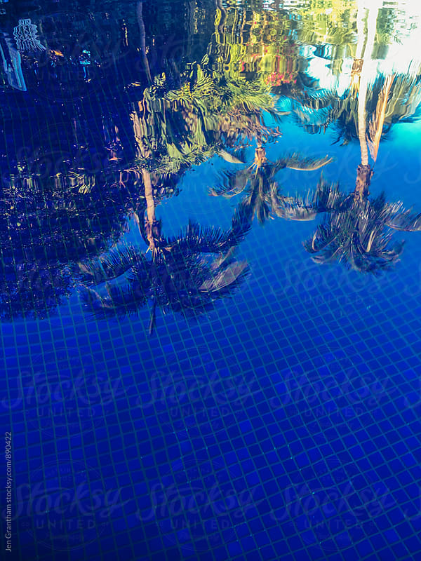 Palm trees reflected in the pool by Jen Grantham for Stocksy United