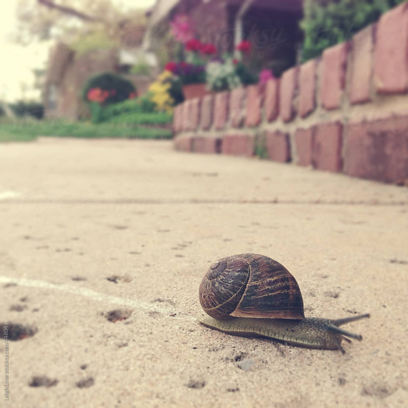 A Little Snail Makes His Way Across a Sidewalk by Leigh Love for Stocksy United