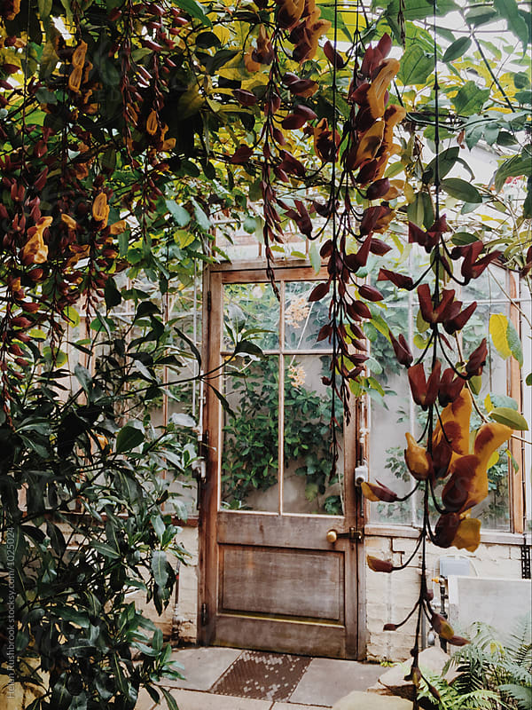 Inside a tropical glasshouse. by Helen Rushbrook for Stocksy United