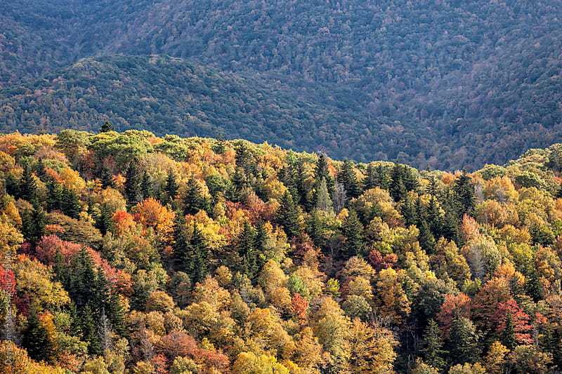 Autumn colors in the southern Appalachian Mountains by David Smart for Stocksy United
