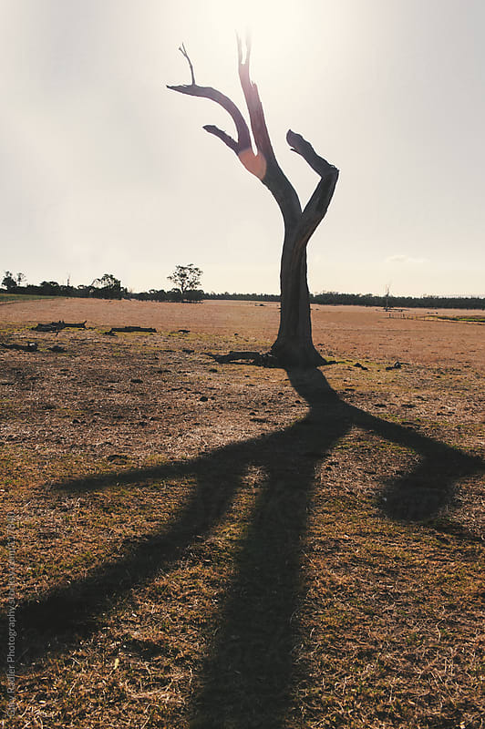 Dead Tree Casting Shadow on Barren Land by Gary Radler Photography for Stocksy United