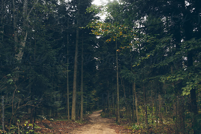 Road in the Woods by Lumina for Stocksy United
