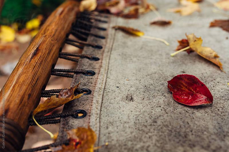 Canvas patio chair with fall leaves on it by Gabriel (Gabi) Bucataru for Stocksy United