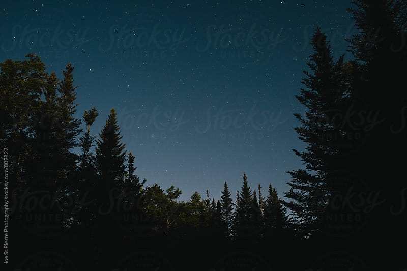 Pine trees at night  by Joe St.Pierre Photography for Stocksy United
