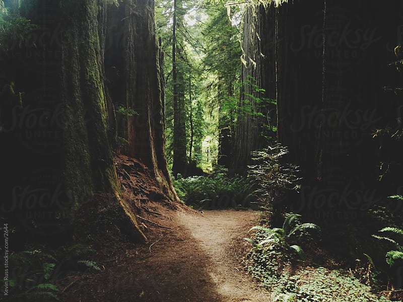 Tree Trail by Kevin Russ for Stocksy United