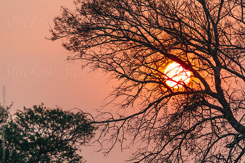 Sunset behind the silhouette of a tree in African savanna by Alejandro Moreno de Carlos for Stocksy United