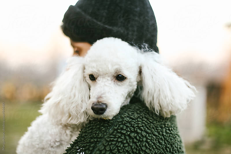 White poodle on the woman's shoulder  by Marija Kovac for Stocksy United