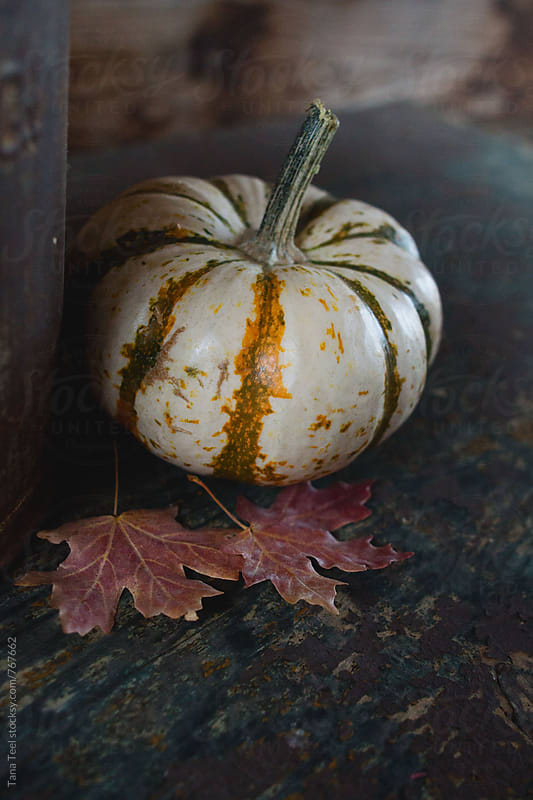 small white striped pumpkin on table with leaves by Tana Teel for Stocksy United