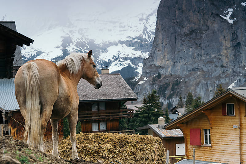 Horse in Switzerland by Maa Hoo for Stocksy United