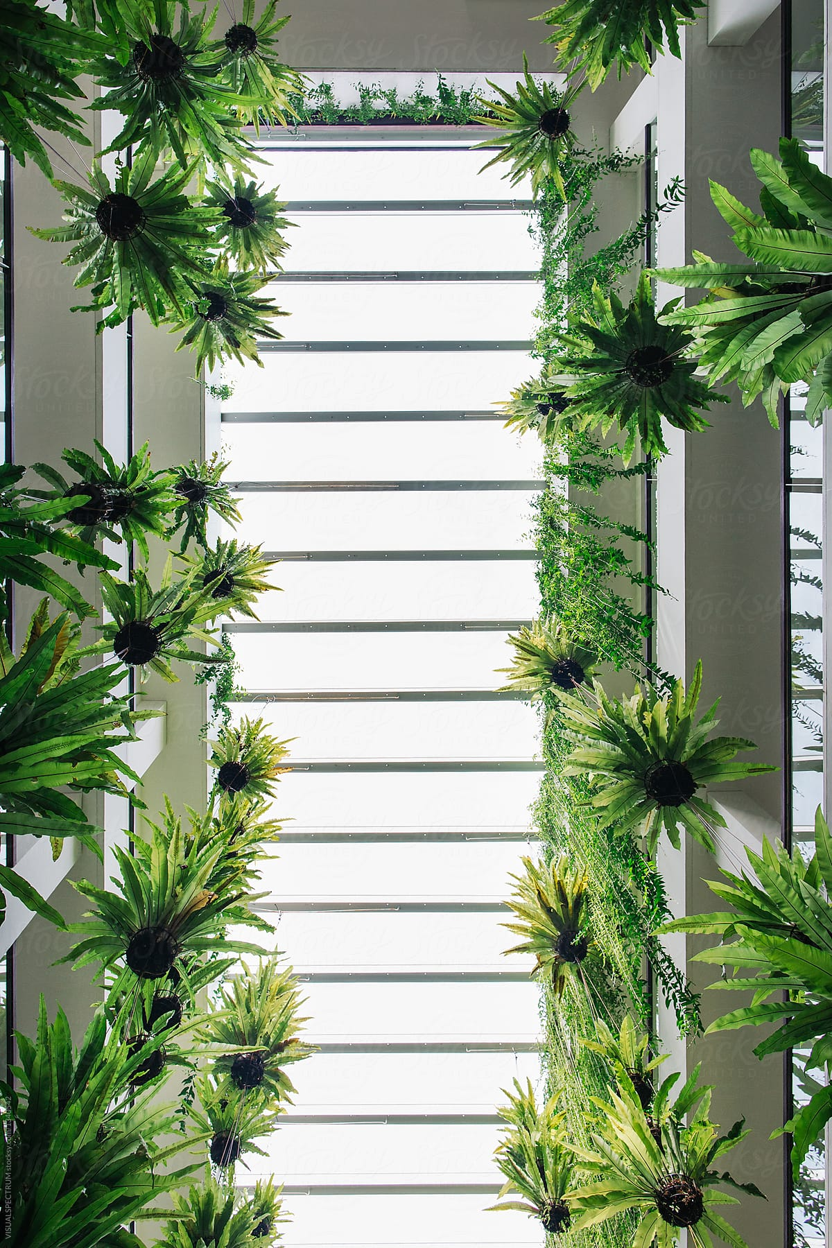 Vertical Garden   Green Tropical Plants Hanging In Bright Building By  VISUALSPECTRUM For Stocksy United