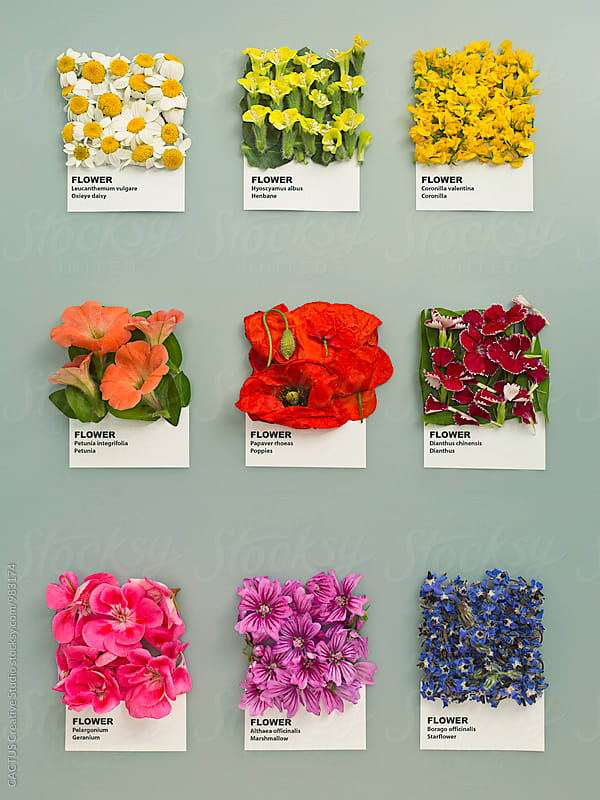 Flowers by Blai Baules for Stocksy United