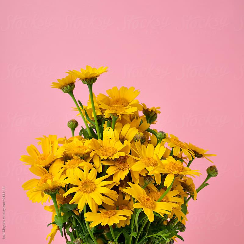 flower by Juan Moyano for Stocksy United