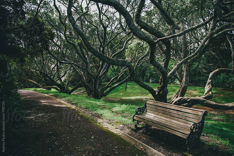 Empty bench in an old park by Andrey Pavlov for Stocksy United