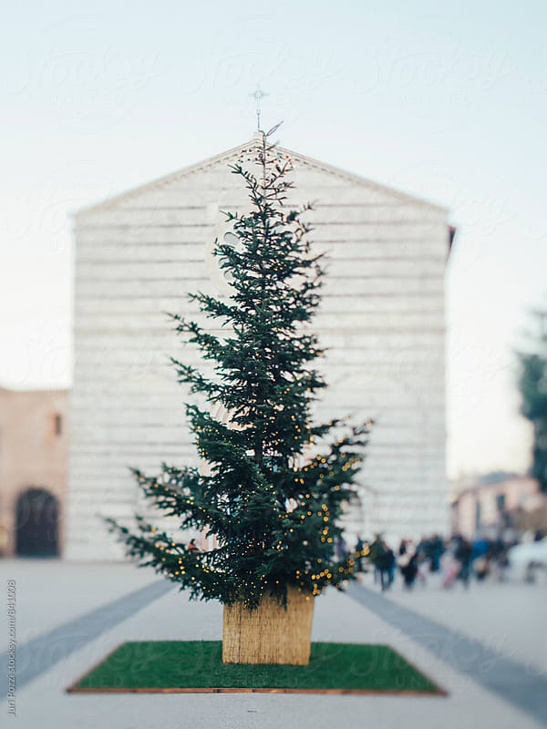 Christmas tree in a square in Lucca by Juri Pozzi for Stocksy United