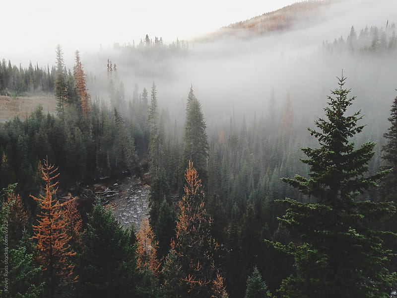 Foggy Mountain Forest River by Kevin Russ for Stocksy United