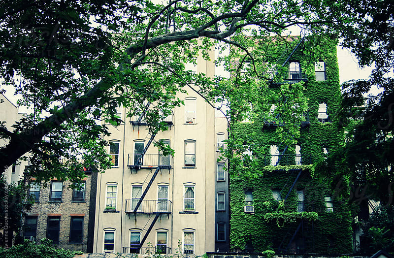City: Ivy-Covered Building by Vivienne Gucwa for Stocksy United