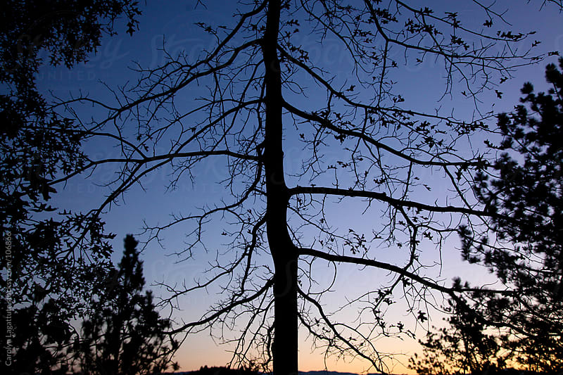Tree silhouette at the beginning of fall that has lost most of it's leaves  by Carolyn Lagattuta for Stocksy United