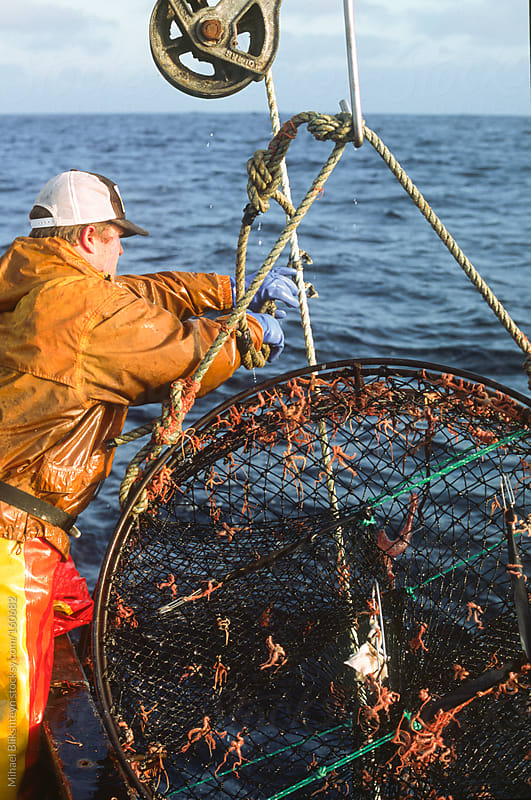 Commercial fisherman retrieving a black cod (sablefish) pot by Mihael Blikshteyn for Stocksy United