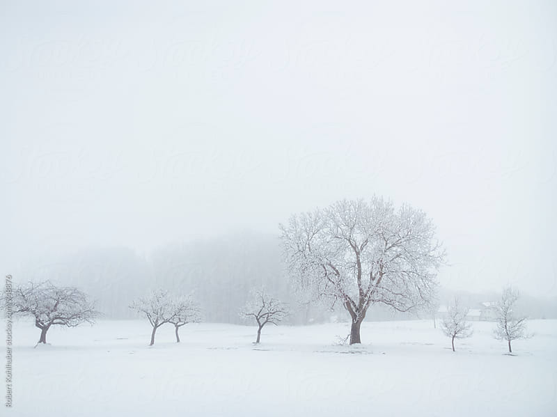 Winter trees in austria by Robert Kohlhuber for Stocksy United