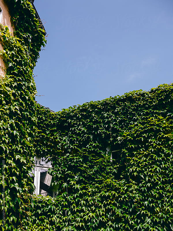 Leaf covered facade by Photographer Christian B for Stocksy United