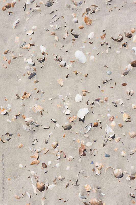 Sea shells on sand by Robert Kohlhuber for Stocksy United