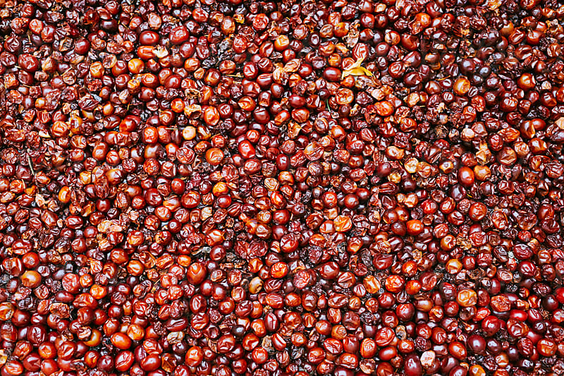 Dried cranberries by Preappy for Stocksy United
