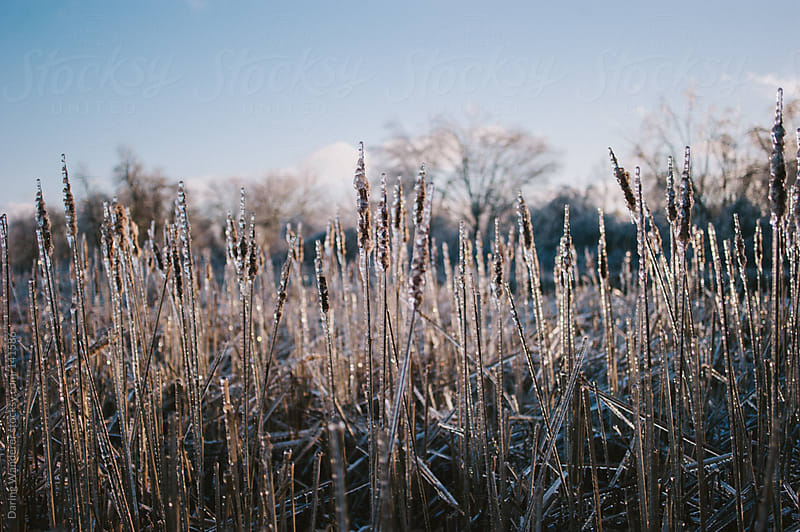 Frozen Limbs by Daring Wanderer for Stocksy United