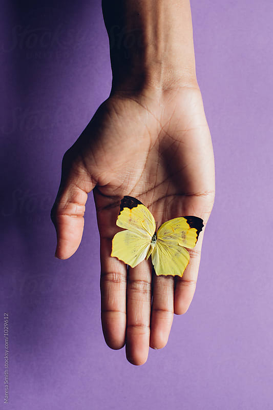 A yellow butterfly resting on a hand against a purple background by Maresa Smith for Stocksy United