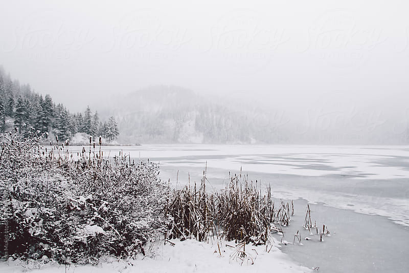 Snow covered bushes on the shore of a frozen lake by Justin Mullet for Stocksy United