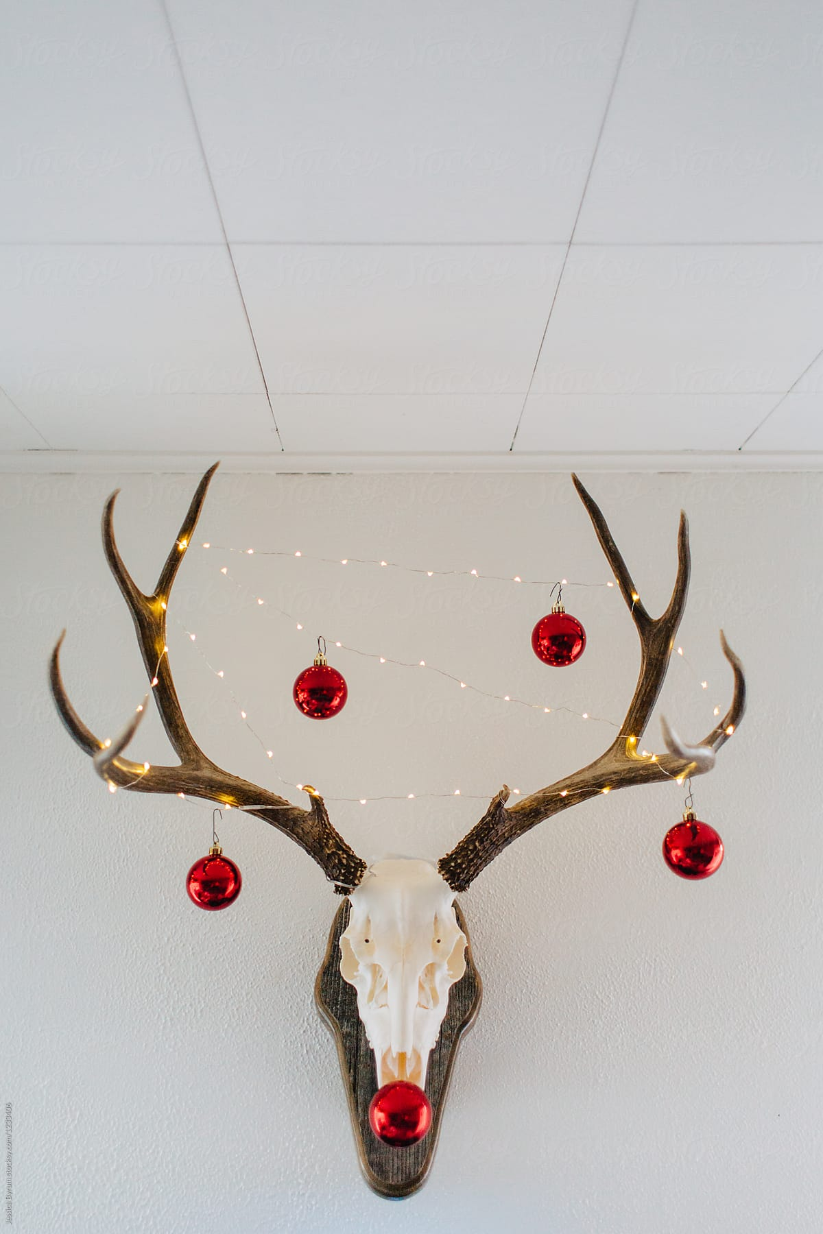European mounted deer skull decorated for Christmas. by Jessica