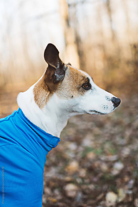 Side profile of a dog in a onesie outdoors by Preappy for Stocksy United