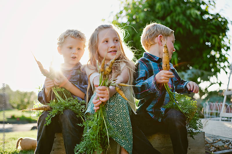 brothers and sister holding Harvested Carrots out of garden by Kristin Rogers Photography for Stocksy United
