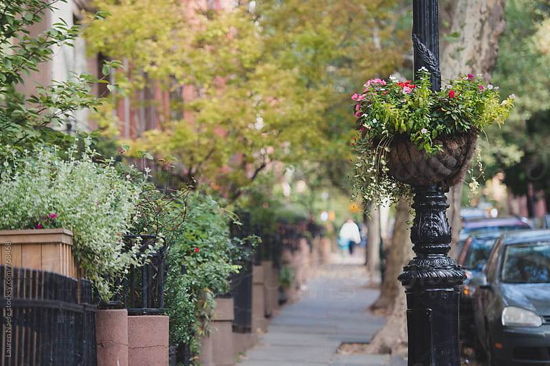 Plants on pretty neighborhood street by Lauren Naefe for Stocksy United