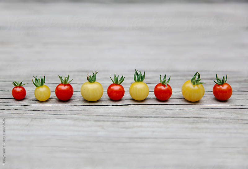 A row of tiny tomatoes on a wooden background. by Holly Clark for Stocksy United