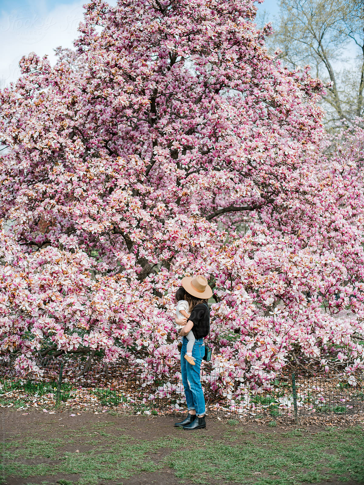 Mom Holding Toddler In Front Of Blooming Magnolia Tree Stocksy United
