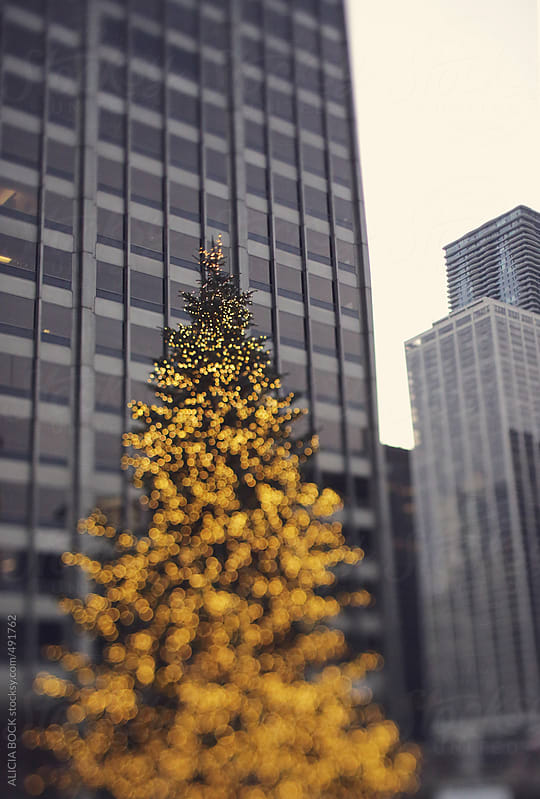 An Outdoor Christams Tree In The City by ALICIA BOCK for Stocksy United